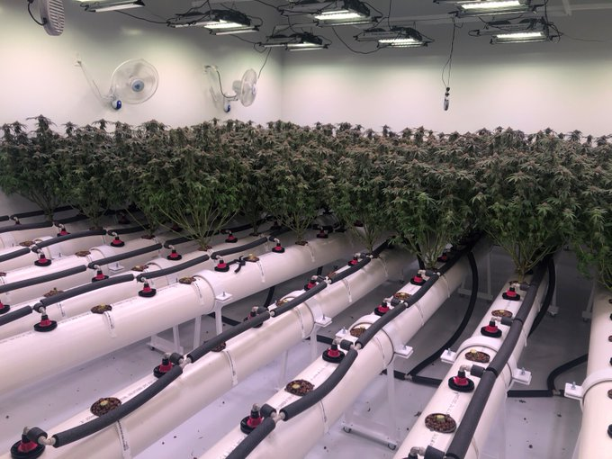 High pressure aeroponics at North 40 Cannabis