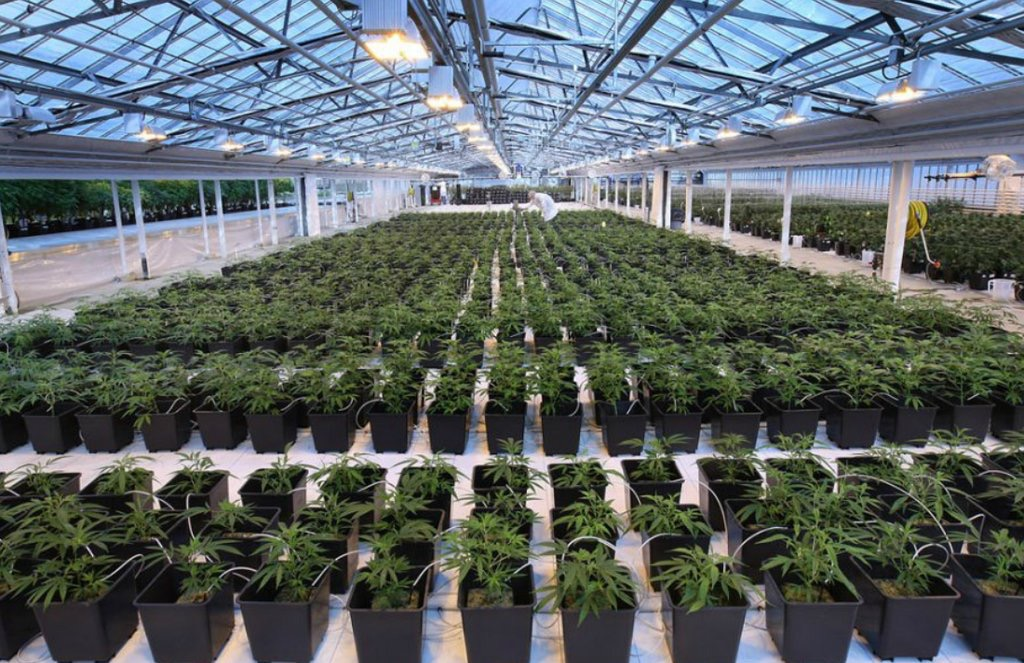 Canadian cannabis crop receipts now over $1 billion