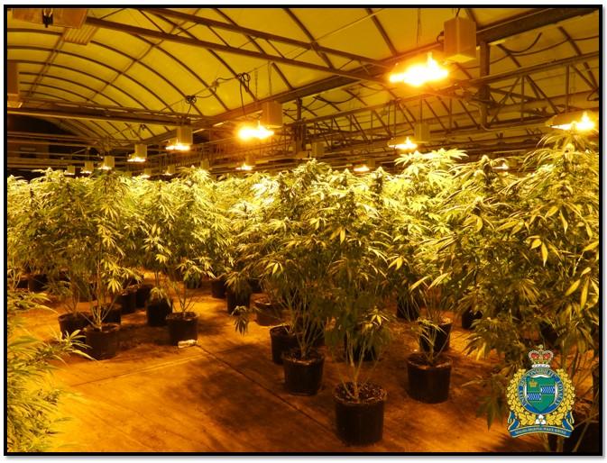 Toronto police arrest six, seize 231kg of cannabis worth an estimated $2.3 million