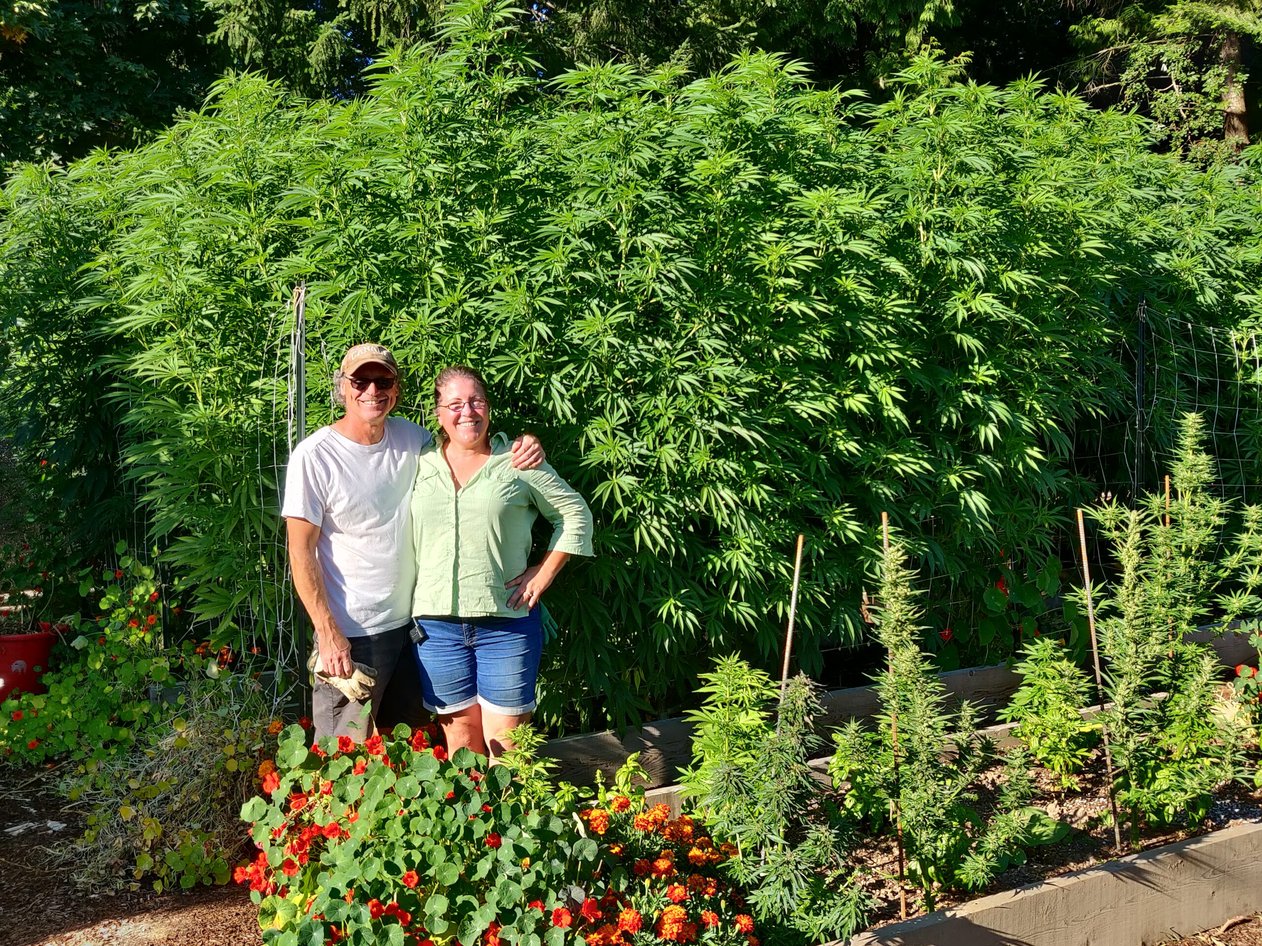 Small BC farm loses home insurance because of legal cannabis