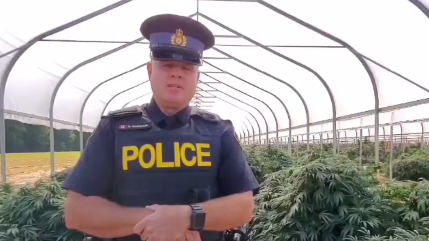 Ontario police seize more than 75,000 cannabis plants and 2400kg of processed cannabis in Leamington