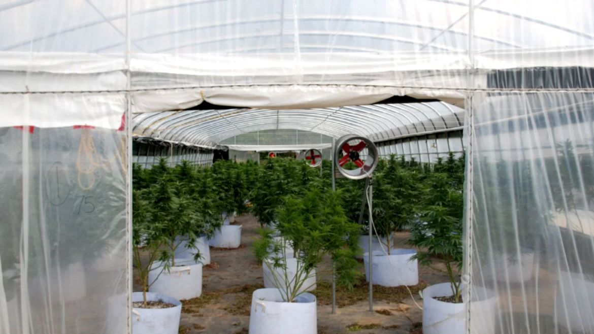 Brighton, Ontario looks to manage personal/designated medical grows through proposed bylaw