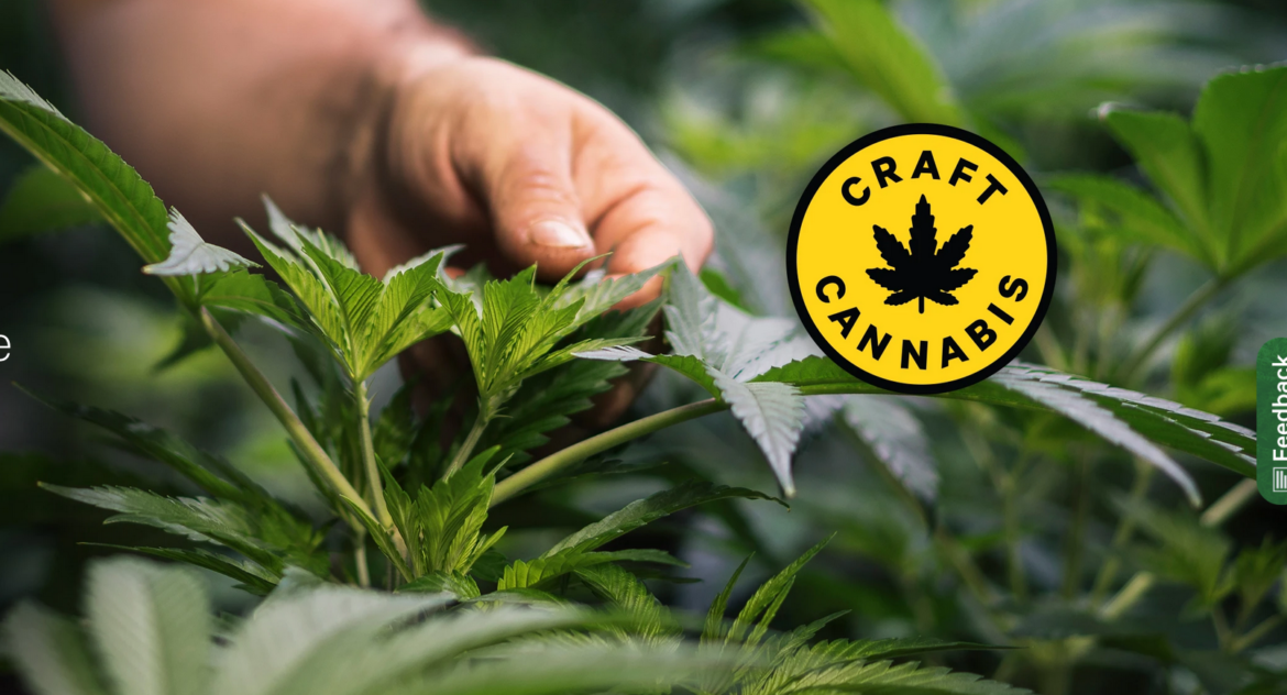 The Ontario Cannabis store launches their Craft Cannabis category