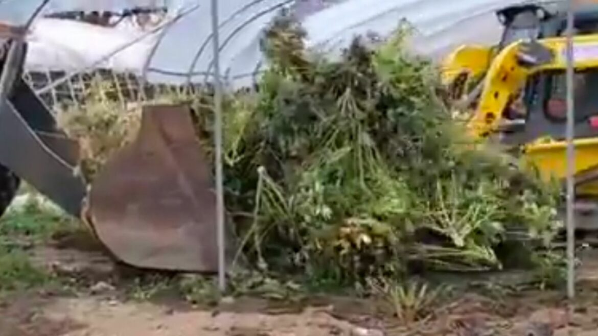 Charges dropped following large raid of Ontario cannabis farm last fall