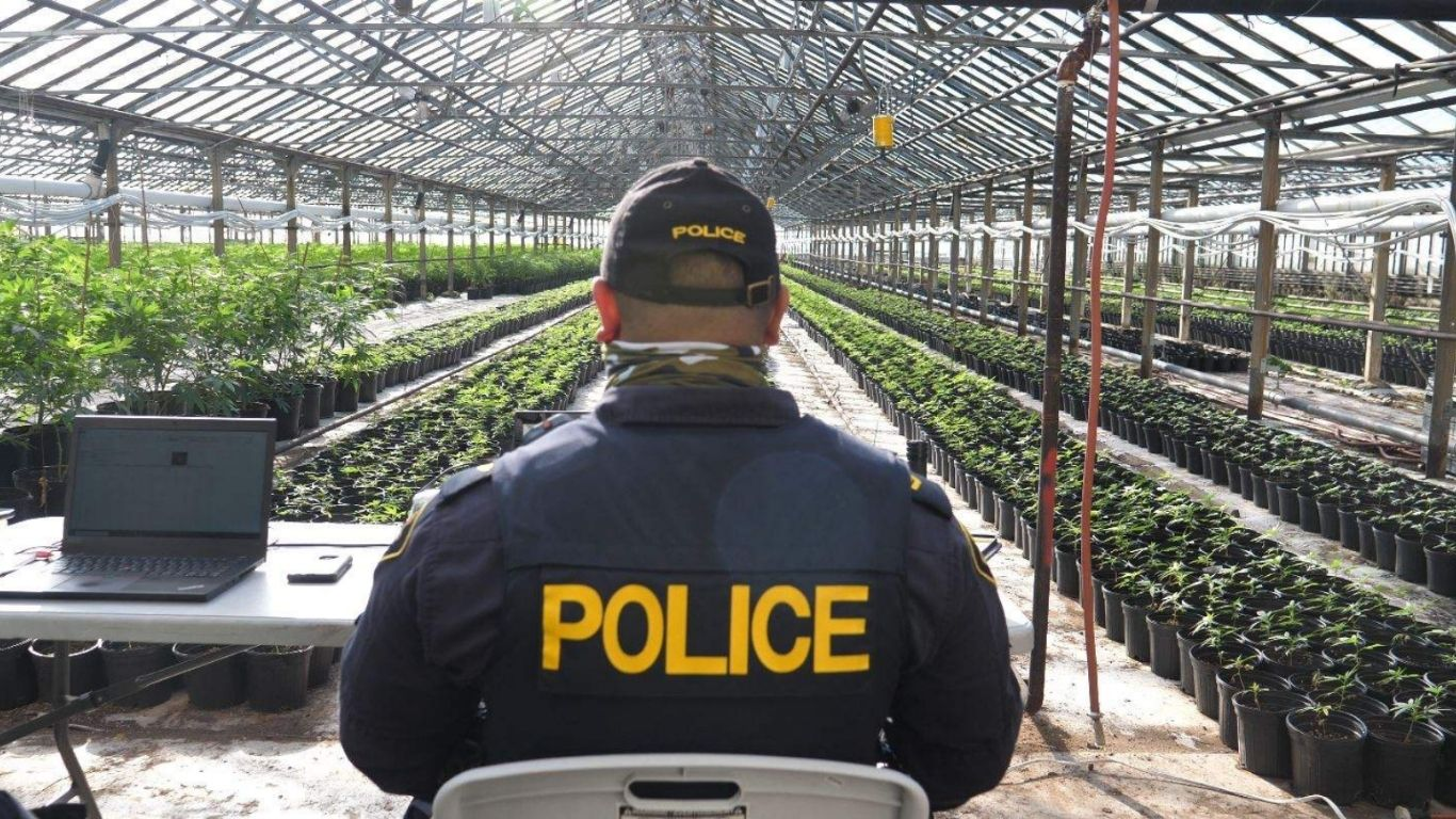 OPP seize more than 4,200 cannabis plants and 350kg of cannabis from Leamington greenhouse, homes
