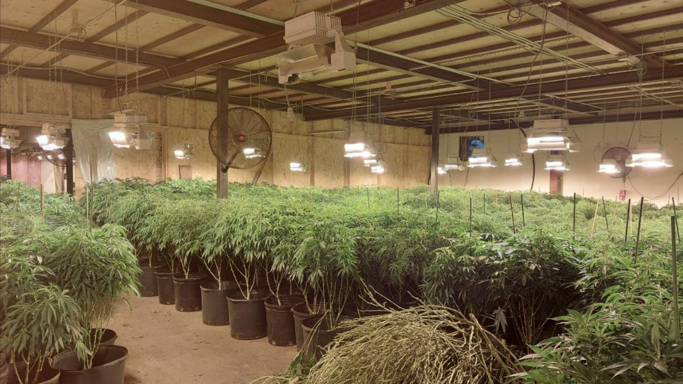 OPP seize more than $5 million worth of cannabis in large raid in Kearney