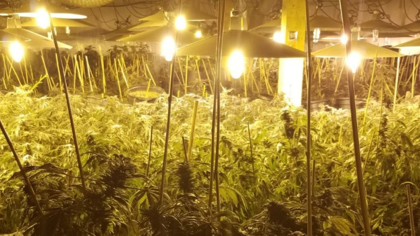 Ontario police seize thousands of plants in Meaford, charging seven