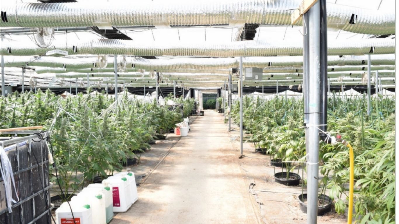 """Ontario police seize processed cannabis, plants, cash from """"licensed"""" grow in Wainfleet"""