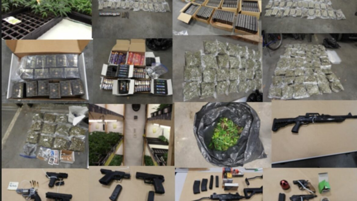 Surrey RCMP seize cannabis, cash, and guns from two BC locations