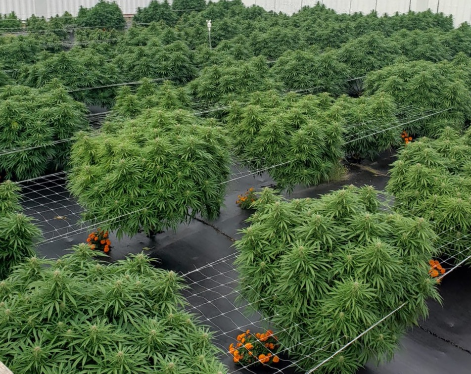 New Brunswick's Wildwood Flowr focussing on regenerative cannabis production