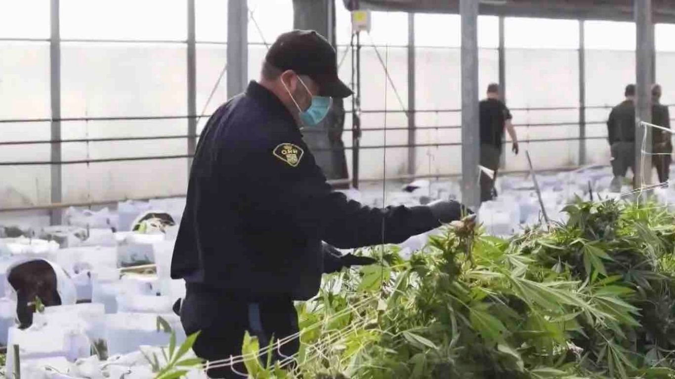 OPP shifting enforcement focus to suppliers of more than 1,000 illicit online cannabis stores