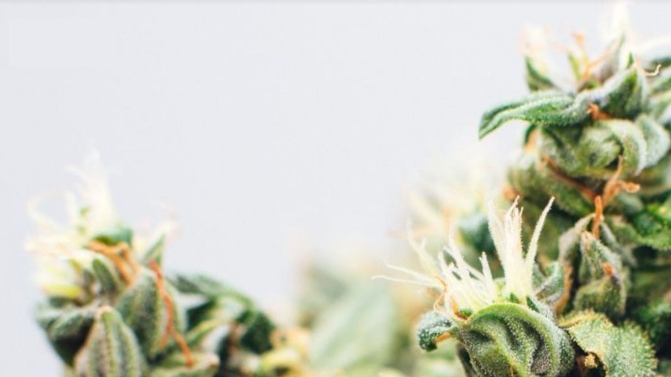 photo of Genetic Authentication of Cannabis Cultivars image
